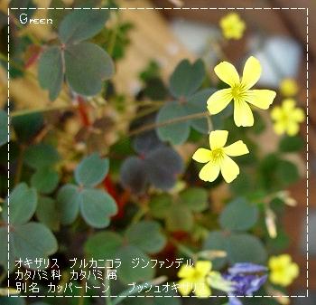 350okizarisu90512c1.jpg