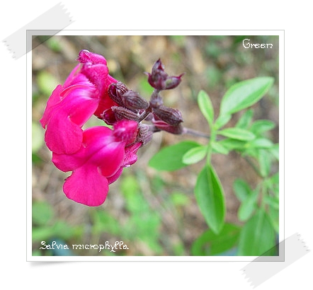 350sarubiabuyana90621c1.jpg