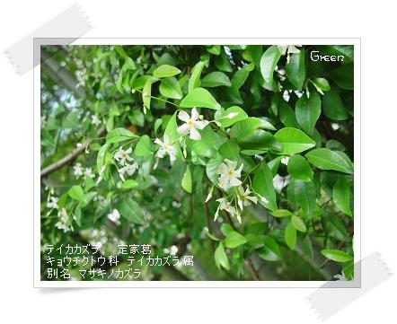 350teikakazura90608j1.jpg