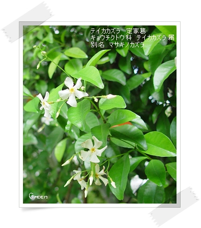 350teikakazura90608k1.jpg