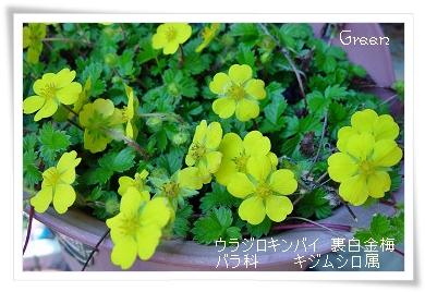 350urajirokinbai90430a.jpg