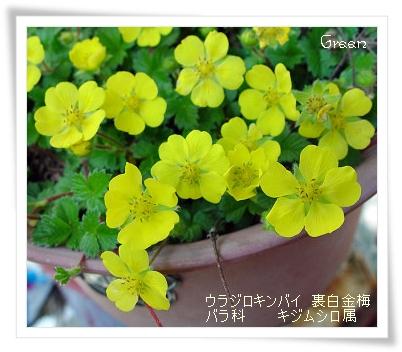 350urajirokinbai90430a1.jpg