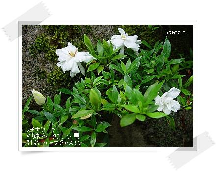 350yaekuchinasi90708d1.jpg