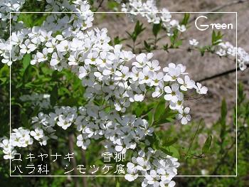 350yukiyanagi90419b1.jpg
