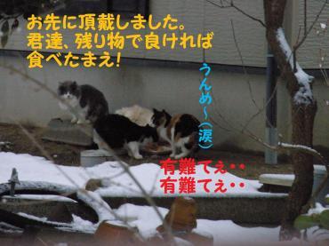 115_convert_20090116104943.jpg