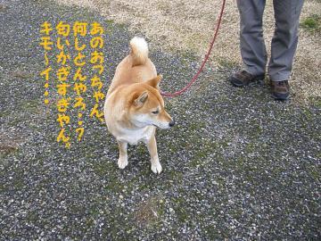 ・代・・托シ代・・胆convert_20090111204236
