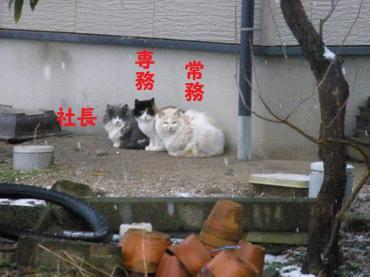 ・代・・托シ偵・・廟convert_20090112195108