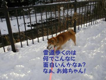 ・代・・托シ薙・・胆convert_20090113175704