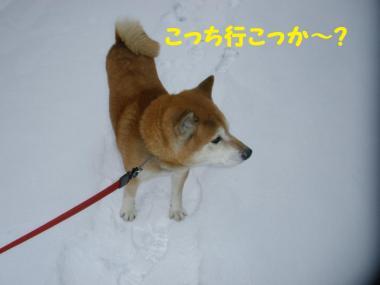 ・托シ托シ包シ棒convert_20090116195409