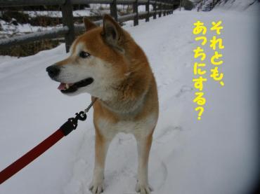 ・托シ托シ包シ誉convert_20090116195455