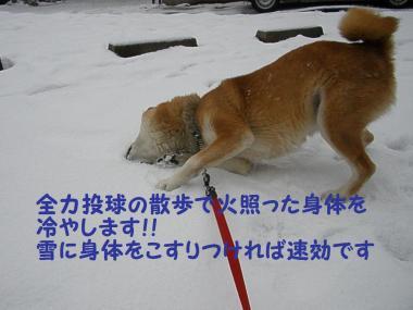 ・托シ托シ廟convert_20090117191535