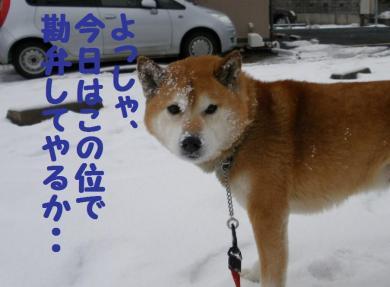 ・托シ托シ包シ廟convert_20090117191757
