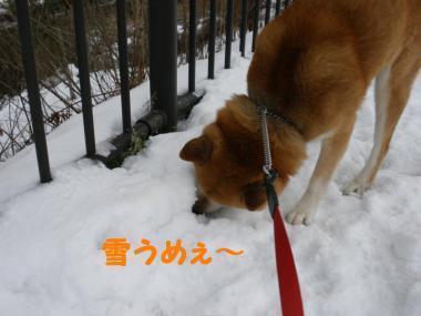 ・托シ托シ包シ兩convert_20090119131813