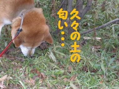 ・托シ抵シ薙・・狙convert_20090123172625