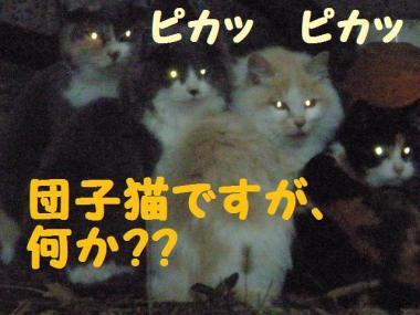 ・托シ抵シ薙・・農convert_20090123203946