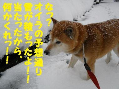 ・托シ抵シ費シ狙convert_20090124203703