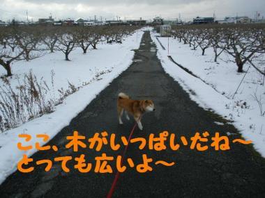 ・托シ抵シ廟convert_20090126003626