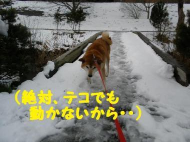 ・托シ抵シ輔・・点convert_20090126003753