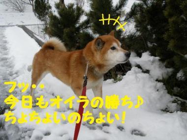 ・托シ抵シ輔・・棒convert_20090126123943