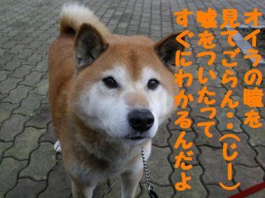 ・抵シ偵・・棒convert_20090202184216