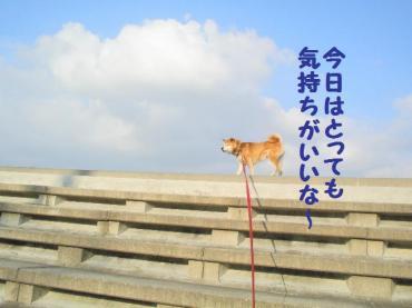 ・抵シ斐・・狙convert_20090205125047