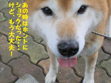 ・抵シ輔・・胆convert_20090207121957