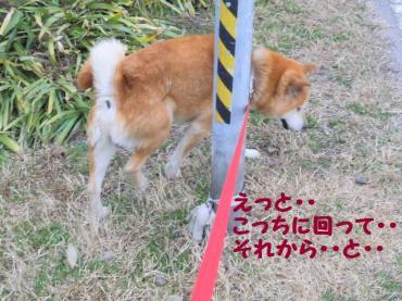 ・抵シ輔・・点convert_20090207121417