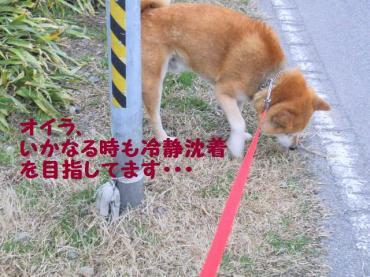 ・抵シ輔・・農convert_20090207121540