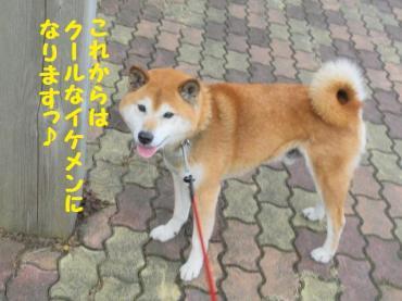 ・抵シ輔・・棒convert_20090207122024