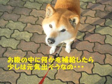 ・抵シ倥・・廟convert_20090209101656