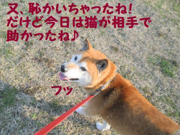 ・抵シ托シ胆convert_20090214220835