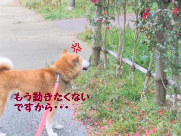 ・抵シ托シ輔・・狙convert_20090215223155