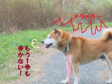 ・抵シ托シ輔・・胆convert_20090215223219