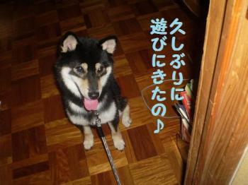 ・假シ薙・・狙convert_20090216093415