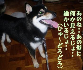 ・假シ薙・・誉convert_20090217125115