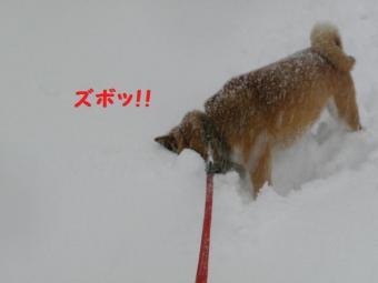 ・抵シ托シ誉convert_20090217171524