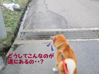 ・抵シ抵シ励・・狙convert_20090227200308