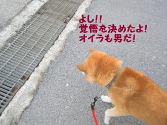 ・抵シ抵シ励・・胆convert_20090227200332