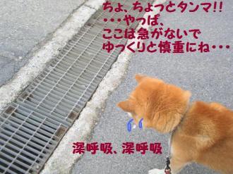 ・抵シ抵シ励・・廟convert_20090227200434