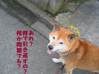 ・抵シ抵シ励・・棒convert_20090227200509