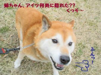 ・薙・・薙・・廟convert_20090304171844