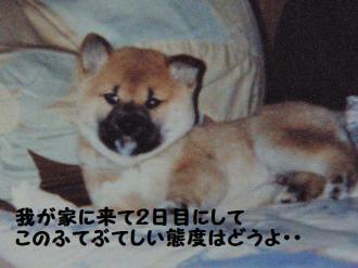 ・難シ誉convert_20090309134711