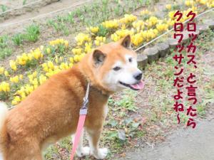 ・難シ兩convert_20090309220801