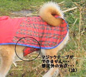 ・撰シ薙・・托シ包シ胆convert_20090315180551