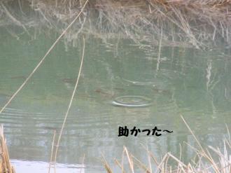 ・難シ抵シ撰シ棒convert_20090320234321