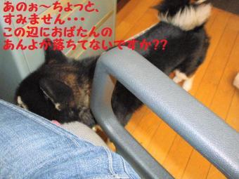 ・難シ抵シ暦シ農convert_20090328203007