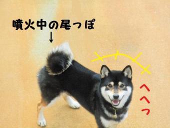 ・費シ撰シ包シ胆convert_20090405220414