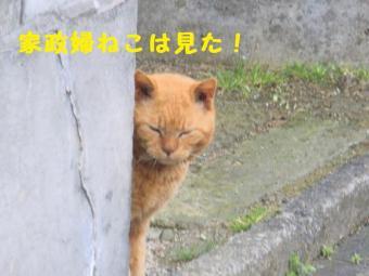 ・費シ難シ・90403+077_convert_20090408222800