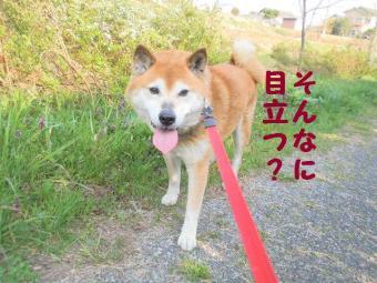 ・費シ假シ・90408+049_convert_20090408230703