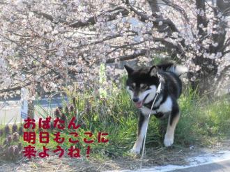 ・費シ呻シ・90409+034_convert_20090409232701